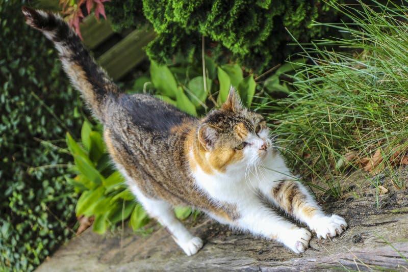 Όμορφη φωτογενής γάτα στοκ φωτογραφίες