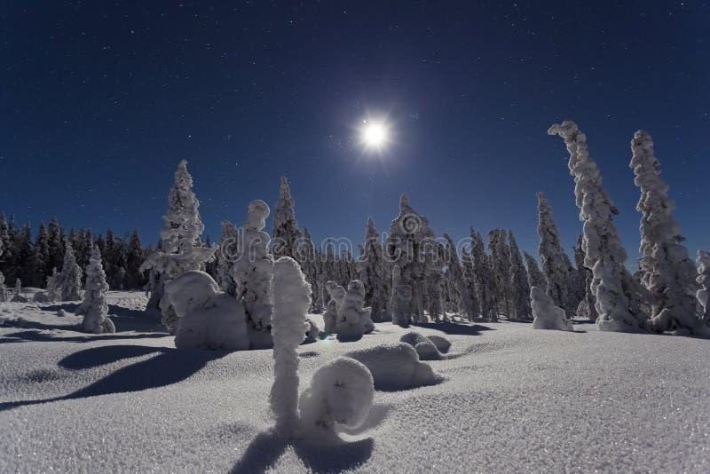 Όμορφη φωτογραφία φύσης και τοπίων της Σουηδίας Σκανδιναβία στην κρύα χειμερινή νύχτα στοκ φωτογραφία με δικαίωμα ελεύθερης χρήσης