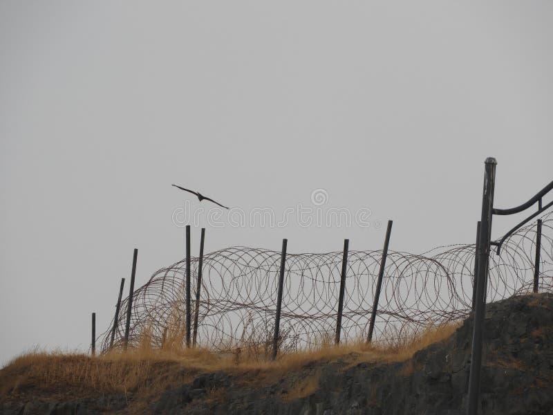 Όμορφη φωτογραφία φύσης πουλιών στοκ φωτογραφία με δικαίωμα ελεύθερης χρήσης