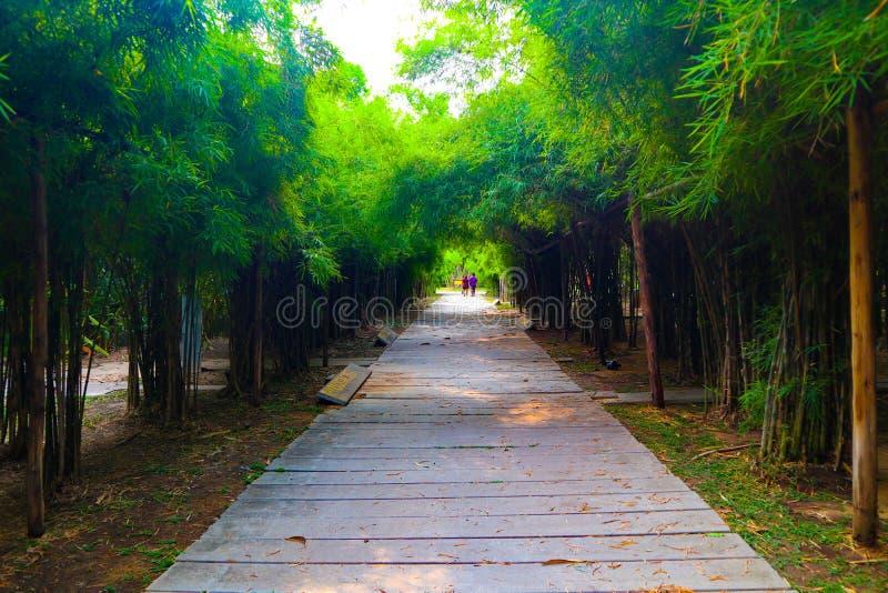 Όμορφη φύση και δασικός δρόμος σηράγγων μπαμπού και δέντρων στα δημόσια πάρκα στοκ εικόνα