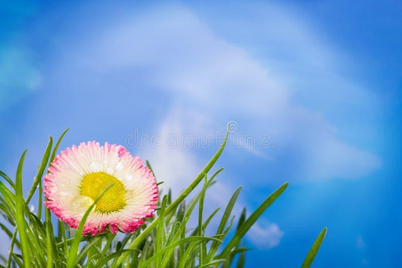 όμορφη φύση στοκ φωτογραφία με δικαίωμα ελεύθερης χρήσης
