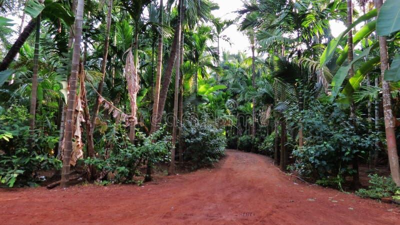 Όμορφη φύση, Kokan, δέντρα, του χωριού δρόμοι στοκ εικόνα