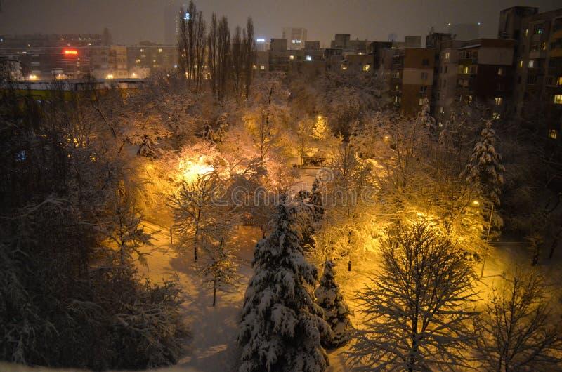 Όμορφη χειμερινή νύχτα σε ένα πάρκο στοκ εικόνα με δικαίωμα ελεύθερης χρήσης