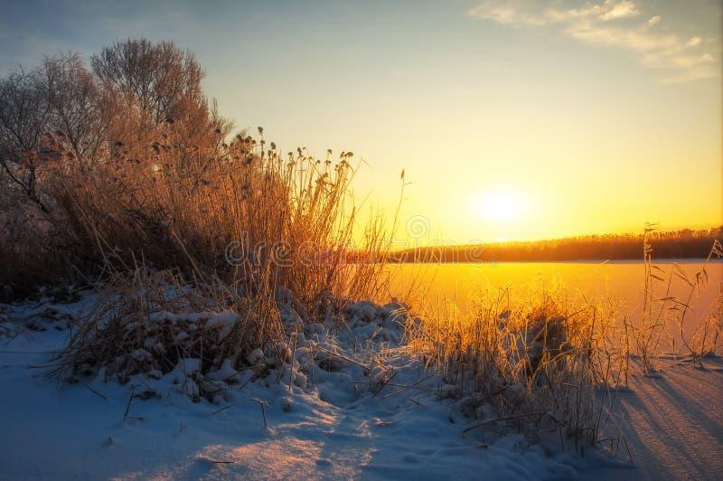 Όμορφη χειμερινή landscape Οι κλάδοι των δέντρων καλύπτονται με την ομιχλώδη ανατολή πρωινού hoarfrost Ζωηρόχρωμο βράδυ στοκ φωτογραφίες