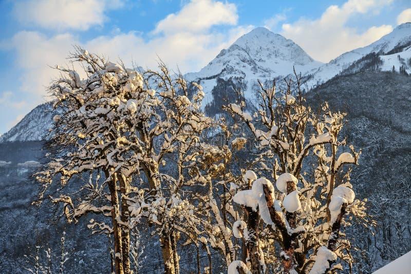 Όμορφη χιονώδης αιχμή βουνών Καύκασου και φυσικό χειμερινό τοπίο μπλε ουρανού με ένα χιονισμένο δέντρο στοκ φωτογραφίες με δικαίωμα ελεύθερης χρήσης