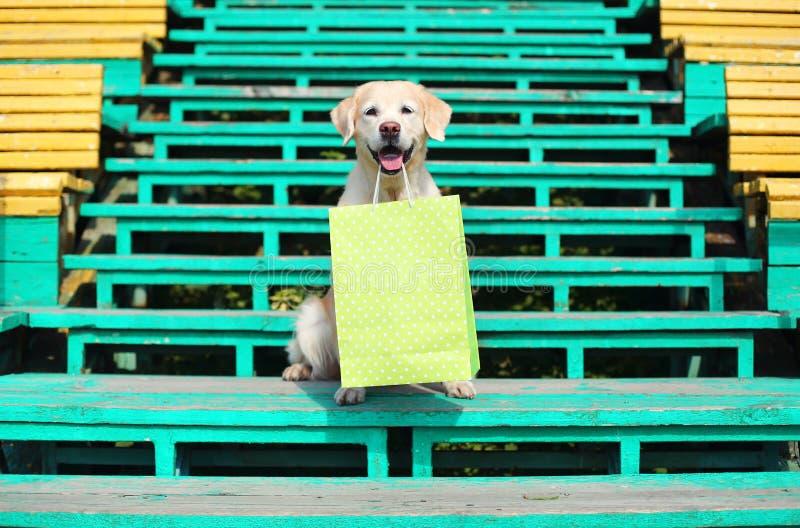 Όμορφη χρυσή Retriever τσάντα αγορών εκμετάλλευσης σκυλιών στο Teet στοκ φωτογραφία με δικαίωμα ελεύθερης χρήσης