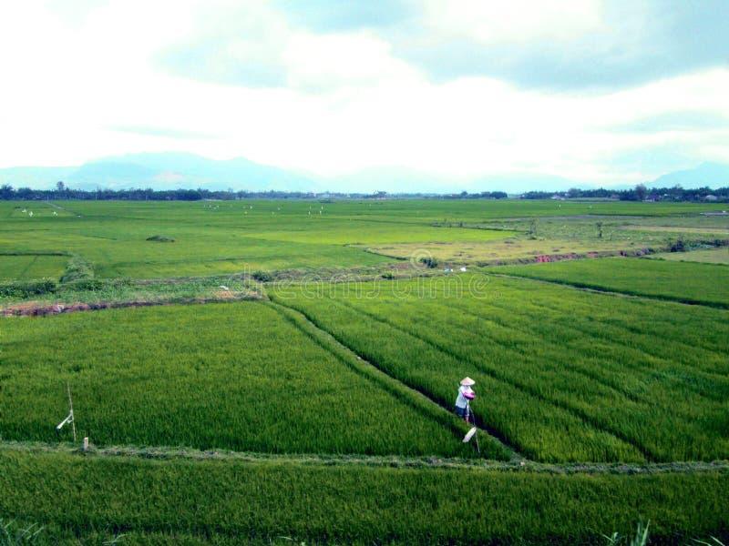 Όμορφη DA Nang στοκ εικόνες
