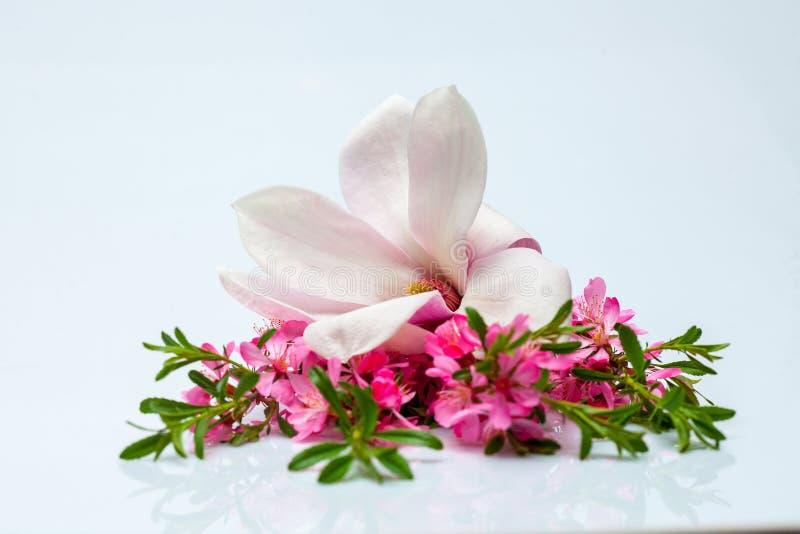 Όμορφοι ανθίζοντας κλαδίσκος και magnolia στοκ φωτογραφίες με δικαίωμα ελεύθερης χρήσης