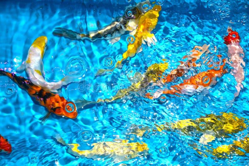 Όμορφοι και ζωηρόχρωμοι φανταχτεροί κυπρίνοι ψαριών στην πλαστική λίμνη στοκ φωτογραφία με δικαίωμα ελεύθερης χρήσης