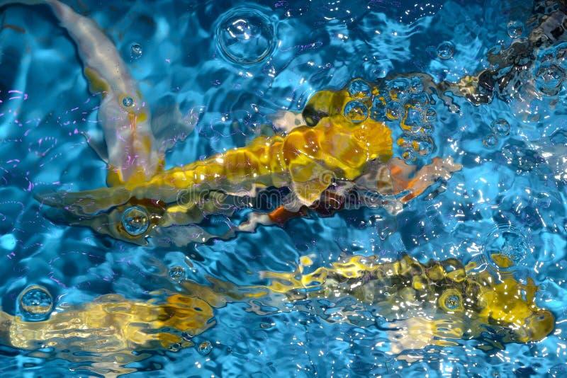 Όμορφοι και ζωηρόχρωμοι φανταχτεροί κυπρίνοι ψαριών στην πλαστική λίμνη στοκ εικόνα