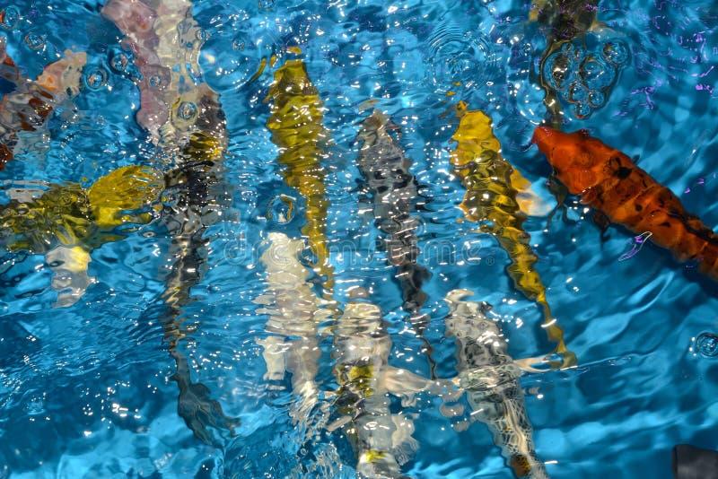 Όμορφοι και ζωηρόχρωμοι φανταχτεροί κυπρίνοι ψαριών στην πλαστική λίμνη στοκ εικόνες