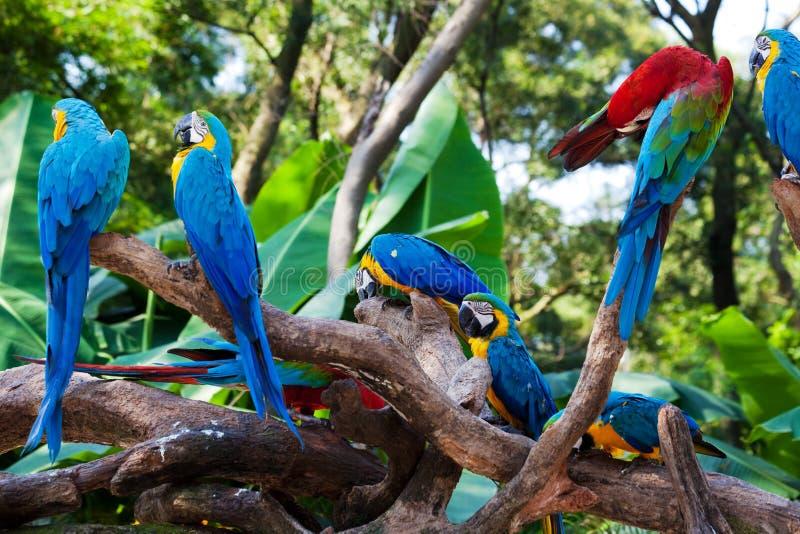 όμορφοι παπαγάλοι στοκ εικόνες