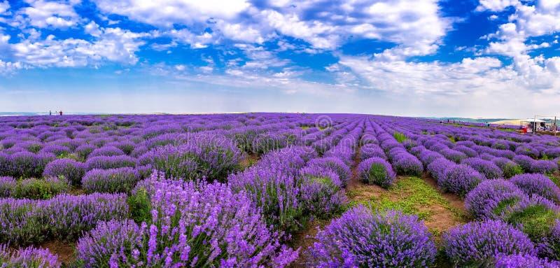 Όμορφοι lavender τομείς μια ηλιόλουστη ημέρα lavender ανθίζοντας scented λουλούδια Τομέας ενάντια στον ουρανό Μολδαβία στοκ φωτογραφίες