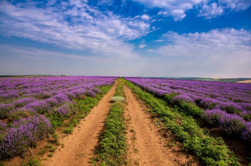 Όμορφοι lavender τομείς μια ηλιόλουστη ημέρα Μολδαβία στοκ εικόνες