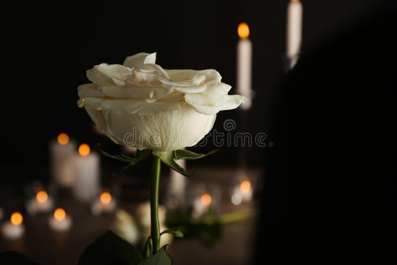 Όμορφος άσπρος αυξήθηκε στο θολωμένο υπόβαθρο στοκ φωτογραφία με δικαίωμα ελεύθερης χρήσης