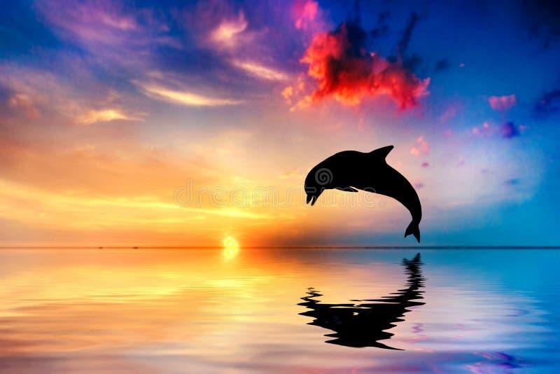 Όμορφος ωκεανός και ηλιοβασίλεμα, άλμα δελφινιών ελεύθερη απεικόνιση δικαιώματος