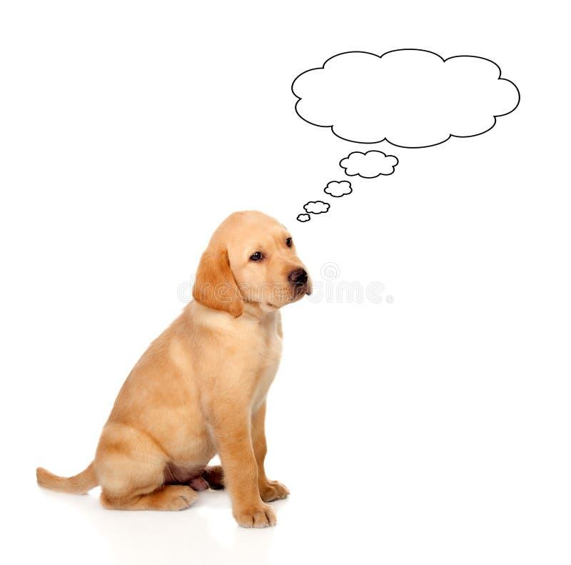Όμορφος λίγη χρυσή Retriever σκέψη φυλής σκυλιών στοκ φωτογραφία με δικαίωμα ελεύθερης χρήσης