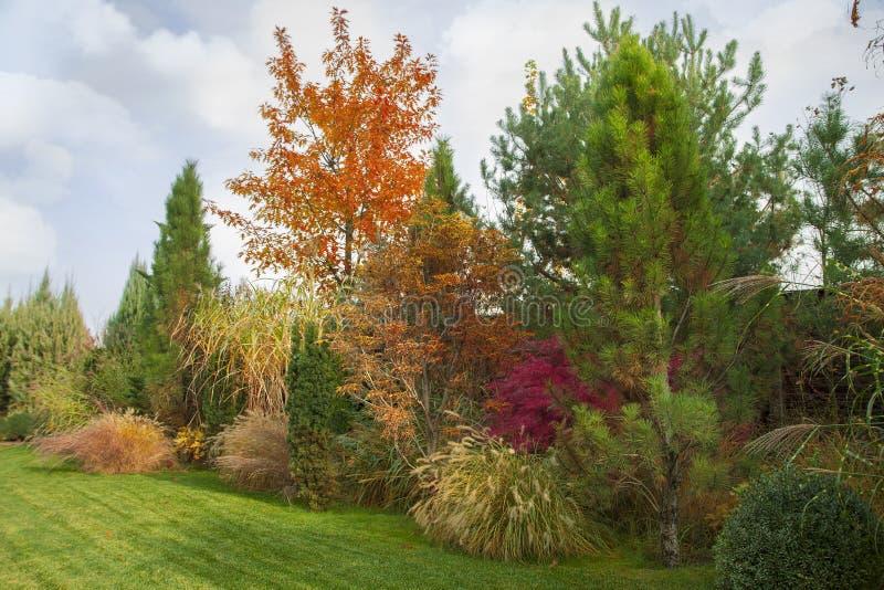 Όμορφος αλπικός λόφος με τα δέντρα, τους θάμνους και τις διακοσμητικές χλόες στο πάρκο φθινοπώρου στοκ φωτογραφία με δικαίωμα ελεύθερης χρήσης