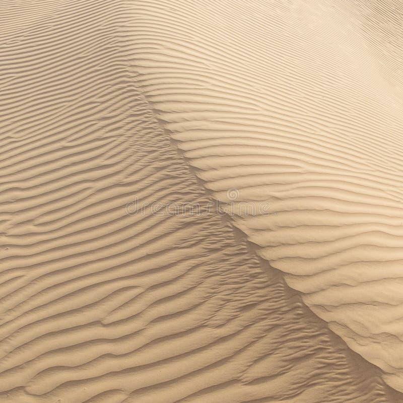 Όμορφος αμμόλοφος άμμου Thar στην έρημο στοκ εικόνα