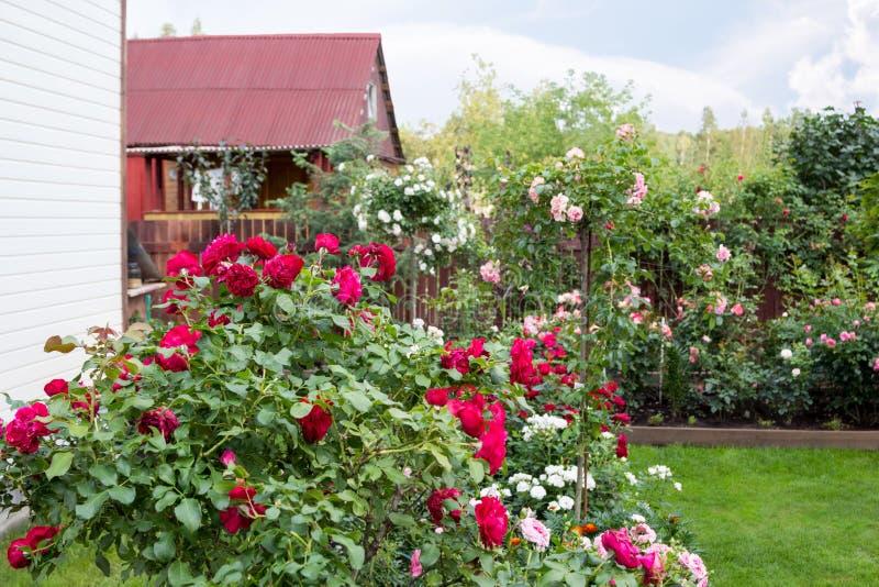 Όμορφος ανθίζοντας κήπος το ύψος του καλοκαιριού στοκ εικόνες