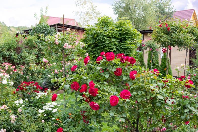 Όμορφος ανθίζοντας κήπος το ύψος του καλοκαιριού στοκ φωτογραφίες