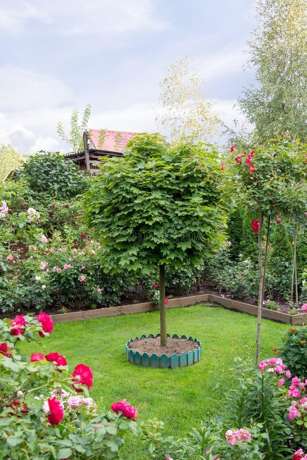 Όμορφος ανθίζοντας κήπος το ύψος του καλοκαιριού στοκ φωτογραφία με δικαίωμα ελεύθερης χρήσης