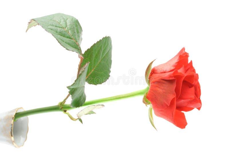 όμορφος αυξήθηκε vase λευ&kappa στοκ εικόνες