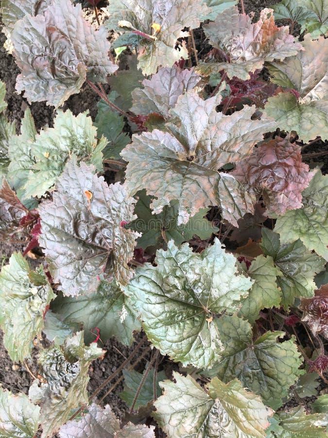 Όμορφος βγάζει φύλλα στοκ εικόνες με δικαίωμα ελεύθερης χρήσης
