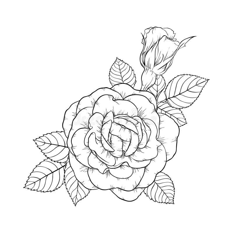 Όμορφος γραπτός αυξήθηκε και φύλλα Floral ρύθμιση που απομονώνεται στο υπόβαθρο ευχετήρια κάρτα σχεδίου και απεικόνιση αποθεμάτων