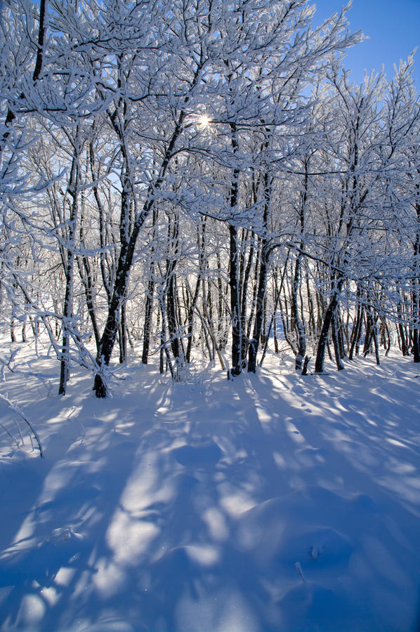 Download όμορφος δασικός χειμώνας στοκ εικόνες. εικόνα από κρύο - 17053042