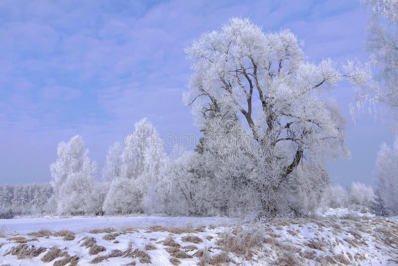 όμορφος διαστημικός χειμώνας σκηνής αντιγράφων Τοπίο της Λιθουανίας στοκ εικόνα με δικαίωμα ελεύθερης χρήσης
