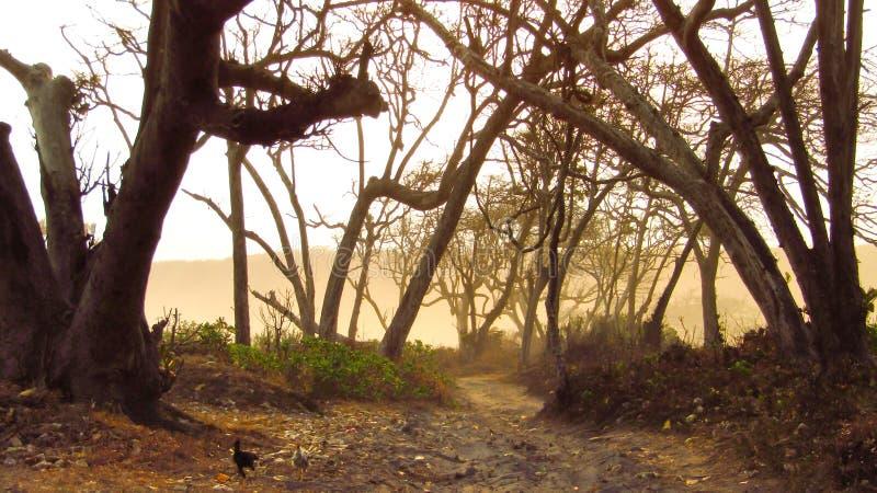 όμορφος δρόμος στην υποπεριφέρεια Ciheras Cipatujah της περιφέρειας Tasikmalaya στοκ φωτογραφίες με δικαίωμα ελεύθερης χρήσης