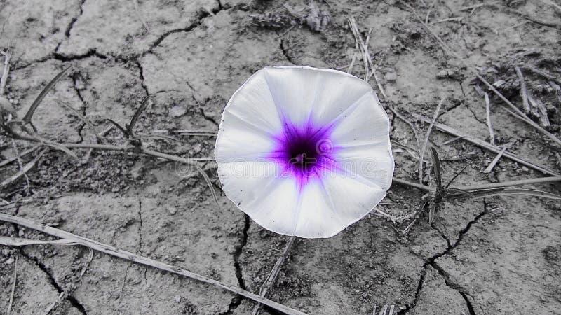 όμορφος ενιαίος λουλουδιών για το υπόβαθρο στοκ φωτογραφία με δικαίωμα ελεύθερης χρήσης