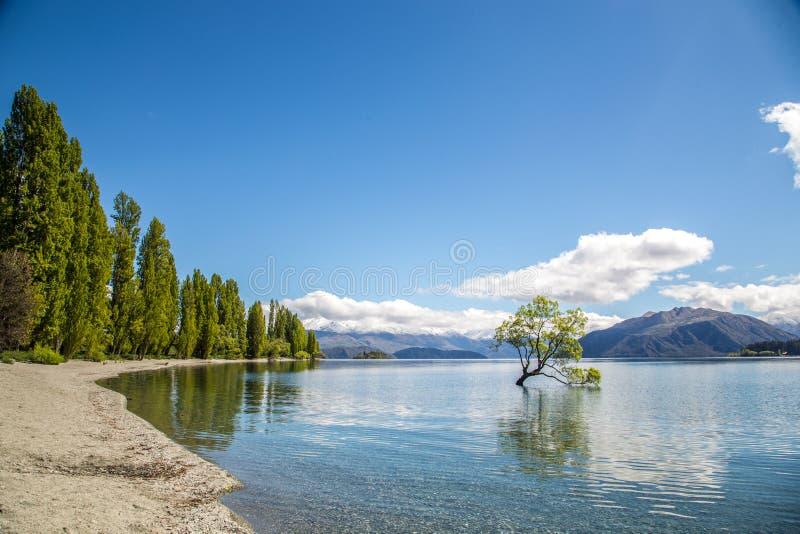 Όμορφος ηλιόλουστος καιρός με το δέντρο Wanaka, λίμνη, Νέα Ζηλανδία στοκ φωτογραφία με δικαίωμα ελεύθερης χρήσης