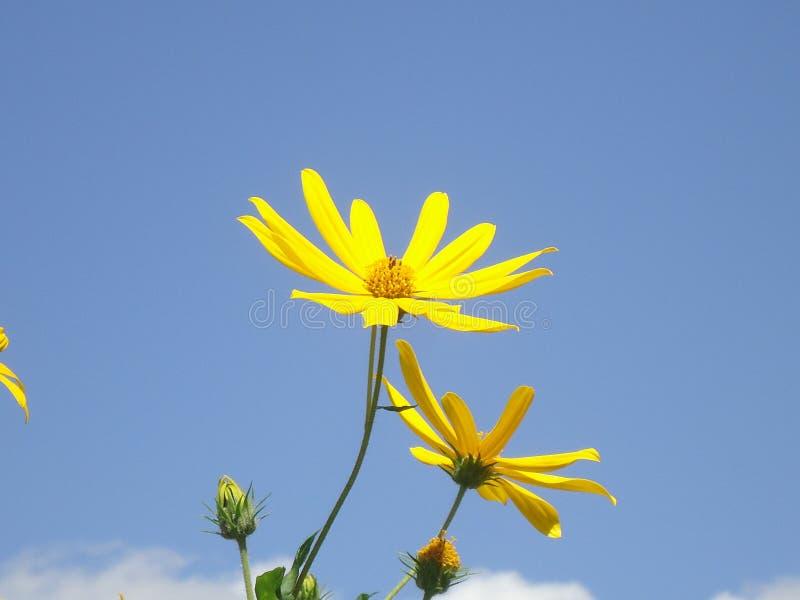όμορφος κήπος λουλουδιών λεπίδων ανασκόπησης στοκ φωτογραφία με δικαίωμα ελεύθερης χρήσης