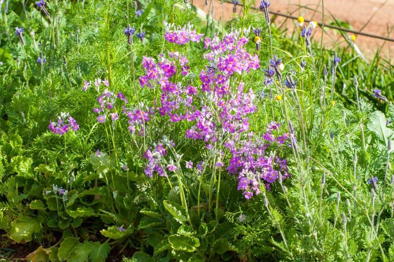 όμορφος κήπος λουλουδιών στοκ εικόνα με δικαίωμα ελεύθερης χρήσης