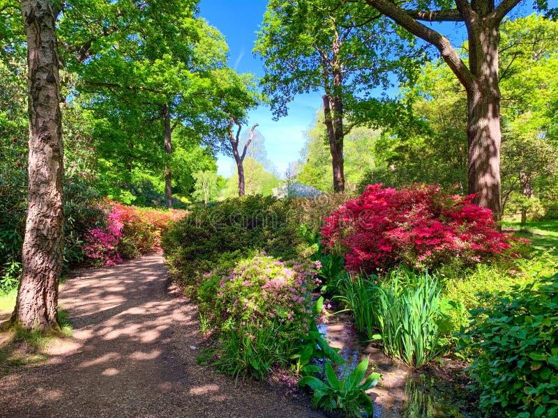 Όμορφος κήπος του πάρκου του Ρίτσμοντ, φυτεία της Isabella στο Λονδίνο στοκ φωτογραφία με δικαίωμα ελεύθερης χρήσης
