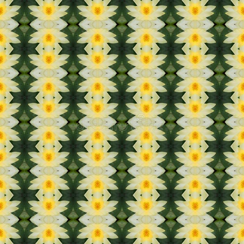 Όμορφος κίτρινος λωτός στην πλήρη άνθιση άνευ ραφής διανυσματική απεικόνιση