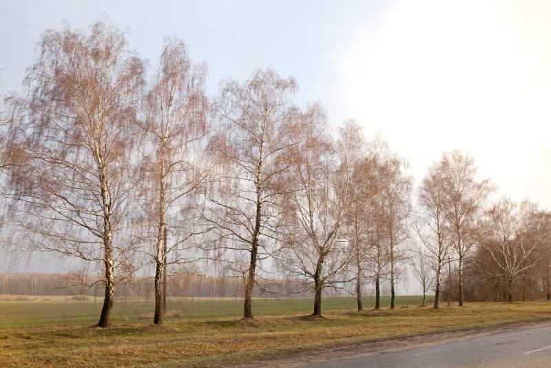 Όμορφος κενός δρόμος επαρχίας, δασικό, νεφελώδες καιρικό τοπίο δέντρων σημύδων στοκ εικόνα