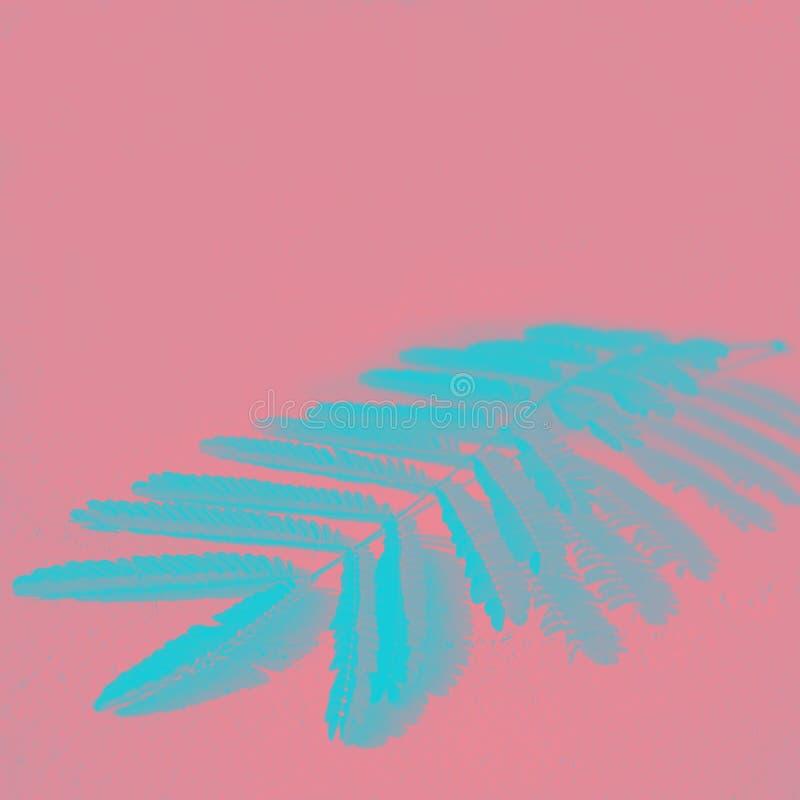 Όμορφος κλάδος του δέντρου με τα μικρά μπλε φύλλα και σχέδιο της σκιάς στο ρόδινο υπόβαθρο κοραλλιών Επίδραση Duotone, διάστημα α στοκ εικόνες με δικαίωμα ελεύθερης χρήσης