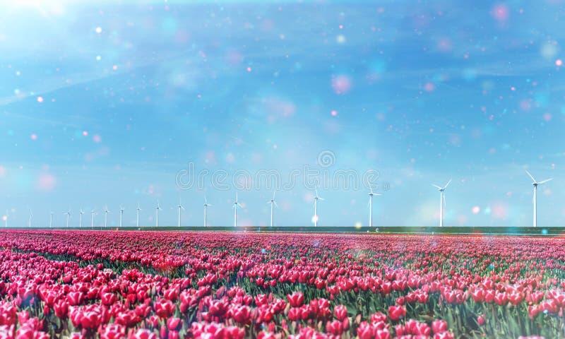 Όμορφος κόκκινος τομέας τουλιπών στις Κάτω Χώρες στοκ φωτογραφία με δικαίωμα ελεύθερης χρήσης