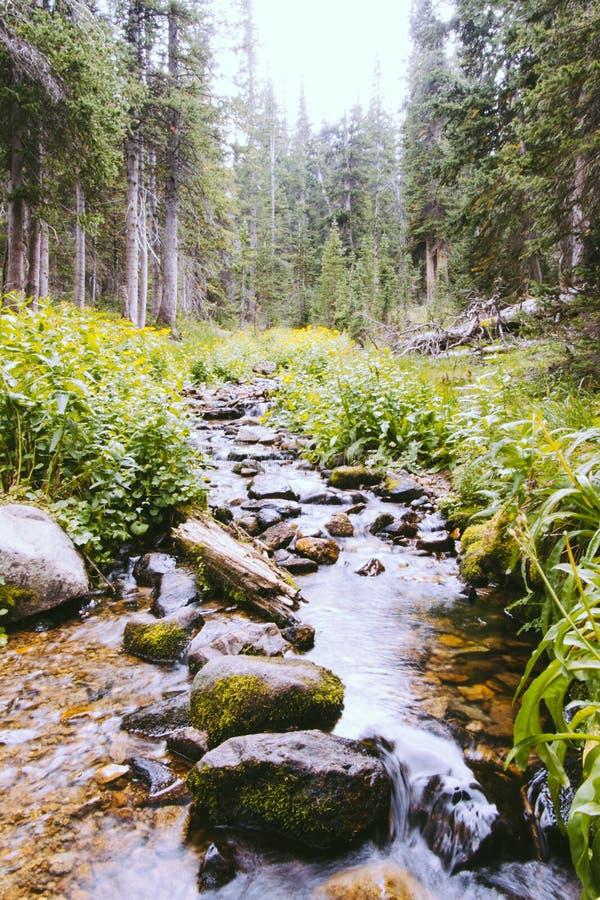 Όμορφος λίγος ποταμός με τους βράχους και πρασινάδα σε ένα δάσος στοκ φωτογραφία με δικαίωμα ελεύθερης χρήσης