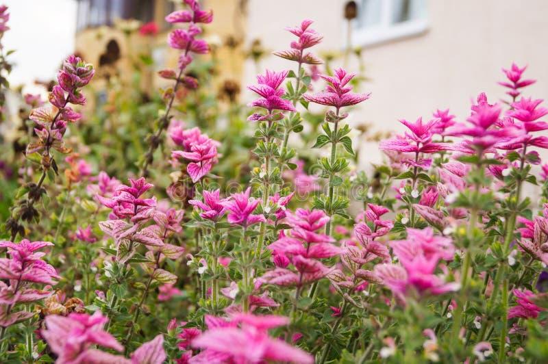 Όμορφος λίγο πορφυρό ιώδες υπόβαθρο λιβαδιών λουλουδιών στοκ εικόνες