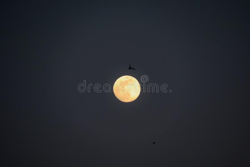 Όμορφος μήνας και πουλιά πυράκτωσης πλήρης που πετούν κάτω από το φως του στοκ εικόνες