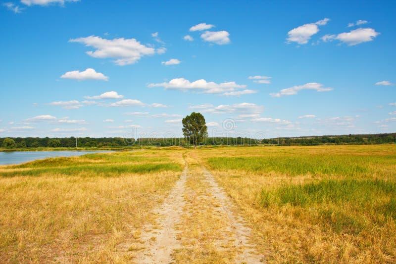 όμορφος μόνος δρόμος τοπίων στο δέντρο στοκ εικόνες με δικαίωμα ελεύθερης χρήσης
