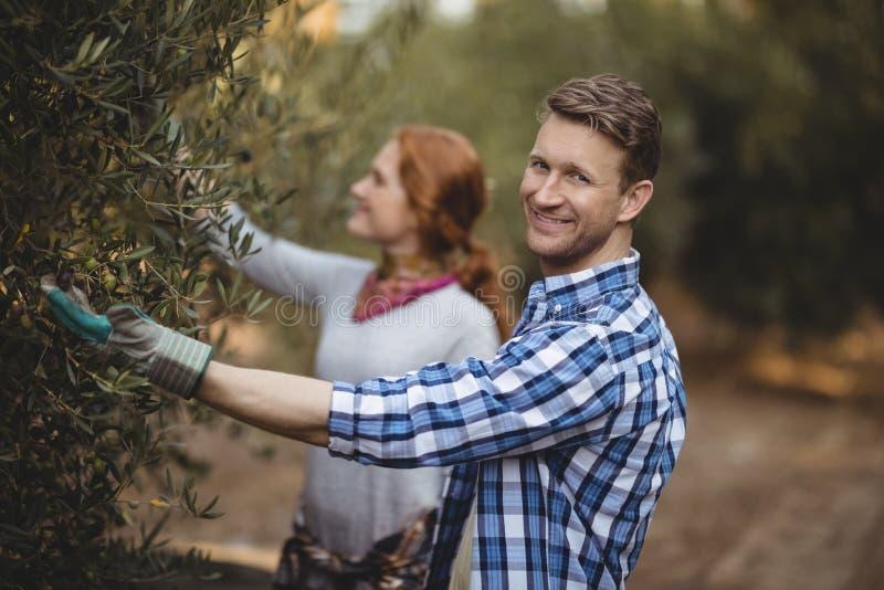 Όμορφος νεαρός άνδρας με τις ελιές μαδήματος γυναικών στο αγρόκτημα στοκ εικόνες με δικαίωμα ελεύθερης χρήσης