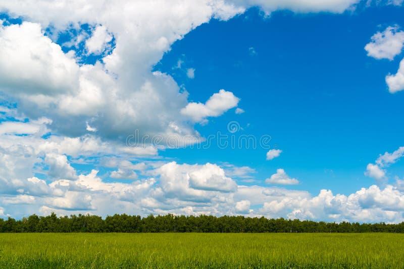 Όμορφος νεφελώδης ουρανός πέρα από τον πράσινο τομέα σίτου στοκ εικόνες με δικαίωμα ελεύθερης χρήσης