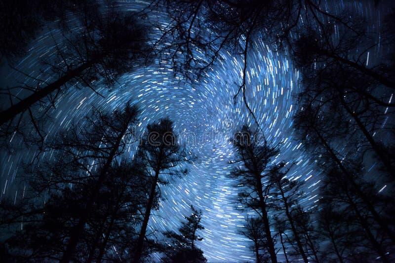Όμορφος νυχτερινός ουρανός, σπειροειδή ίχνη αστεριών και δάσος στοκ φωτογραφία με δικαίωμα ελεύθερης χρήσης