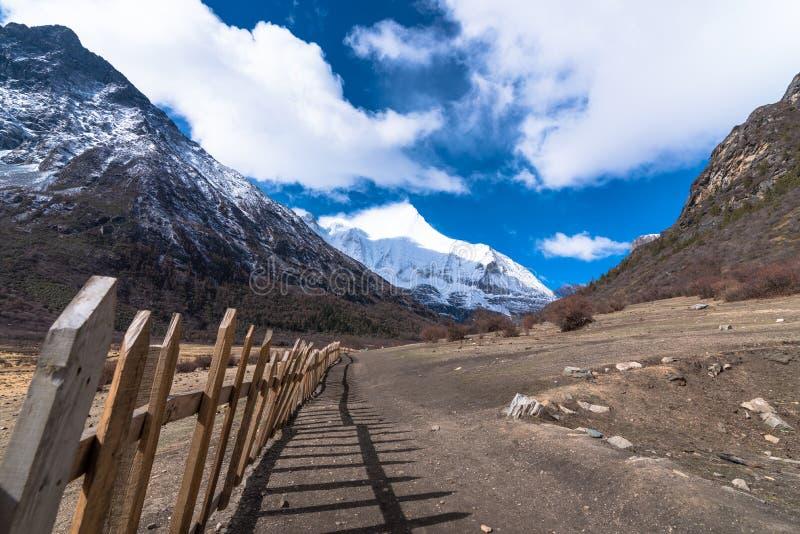 Όμορφος ξύλινος τοίχος για το τοπίο φθινοπώρου Yaks του εθνικού πάρκου Daocheng Yading στοκ εικόνες