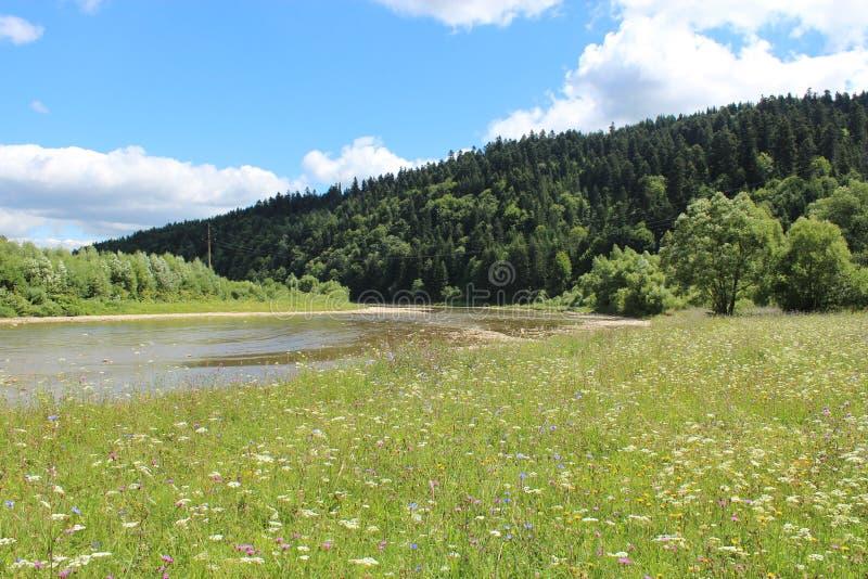 Όμορφος ορεινός ποταμός ταχύτητας στοκ εικόνα με δικαίωμα ελεύθερης χρήσης